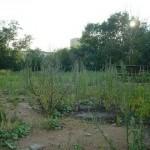 История возникновения села Шелепиха