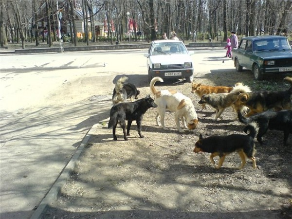 Собачьи банды на Шелепихе